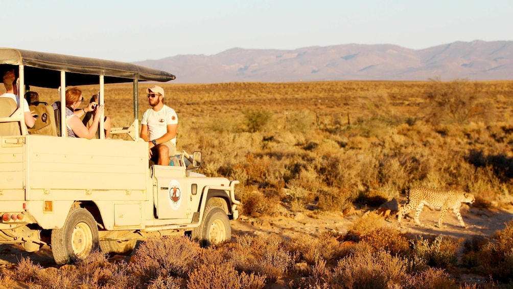 Show item 1 of 4. Full-Day Safari from Cape Town