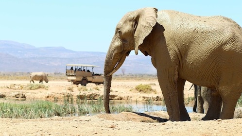 Close view of an elephant on the Full-Day Safari from Cape Town