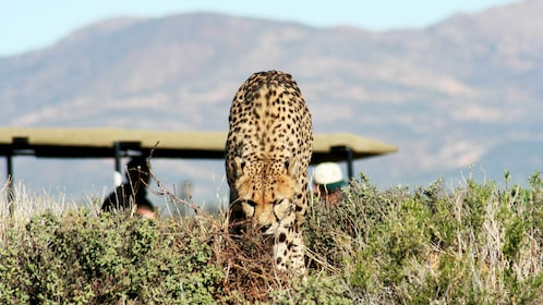Wildlife viewing on the Full-Day Safari from Cape Town