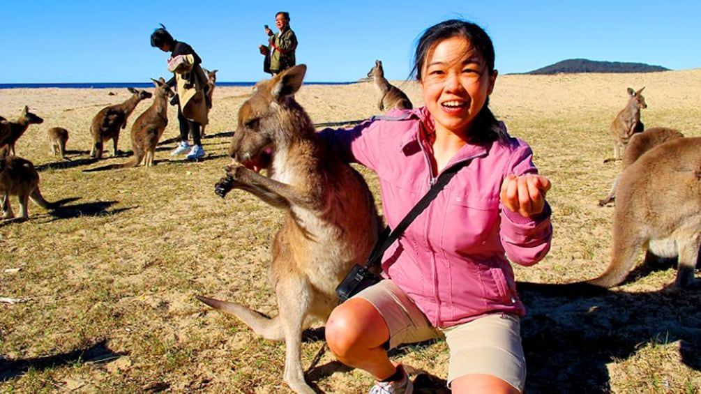 Show item 3 of 5. Woman poses next to Kangaroos