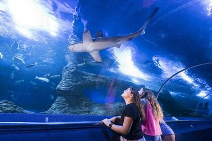 AQWA - The Aquarium of Western Australia - General Admission