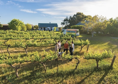 Barossa Valley Highlights Wine & Food Tour