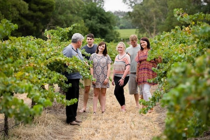 Tour guide leads group through vineyard in Adelaide
