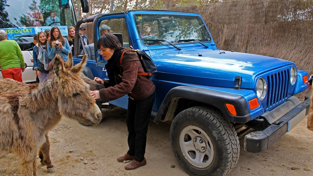 Show item 5 of 5. Woman petting a donkey in Costa Blanca