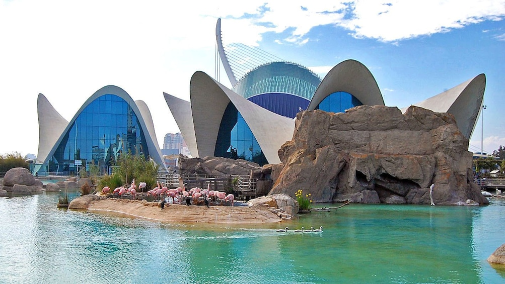 Show item 2 of 4. Flamingos outside of modern buildings in Valencia