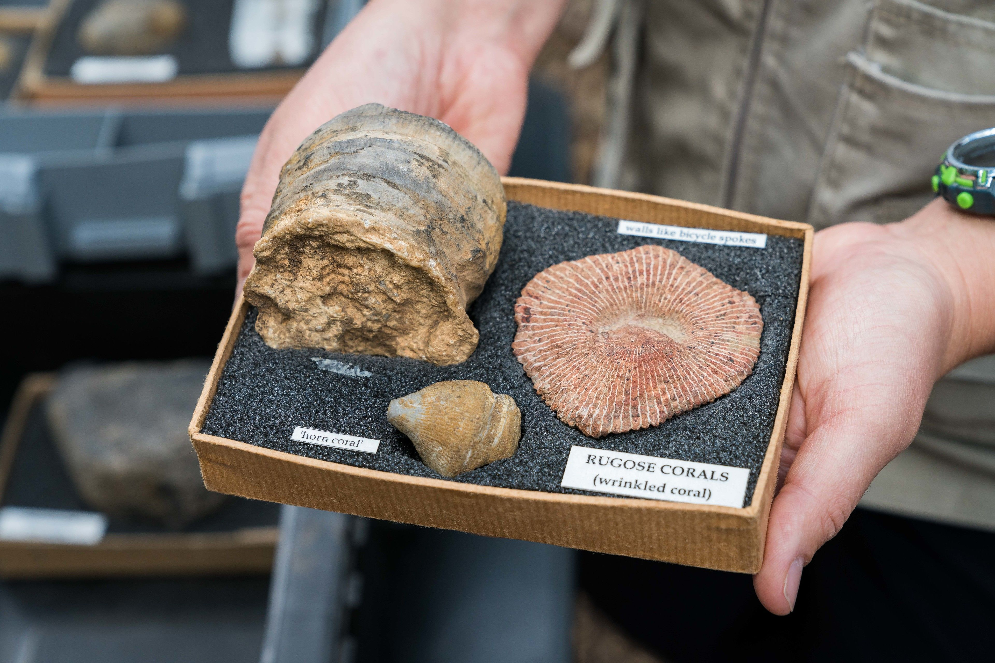Guide holding fossilized coral in Australia