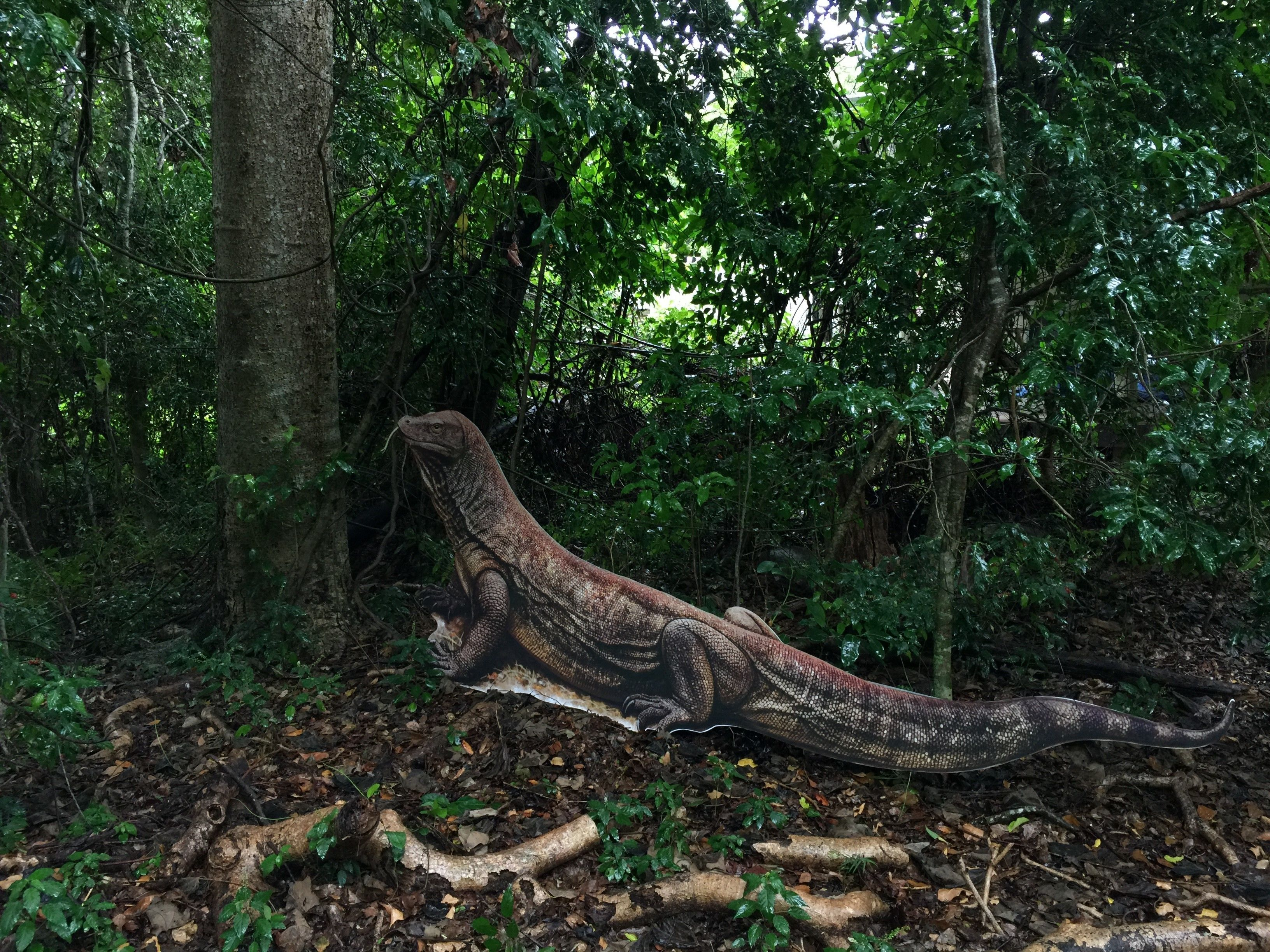 Cardboard cutout of a Komodo dragon in the woods in Australia