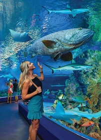 Cairns Aquarium Tickets