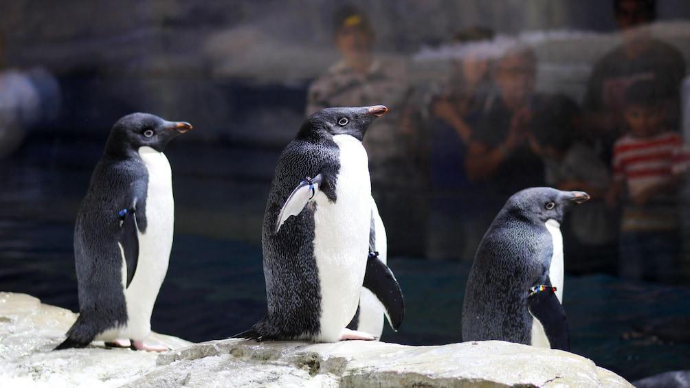 Cargar foto 2 de 8. Penguins stand on rocks at zoo in Guadalajara