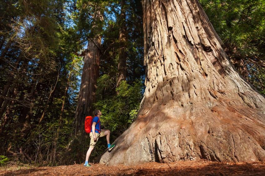 Total Yosemite Experience from San Jose