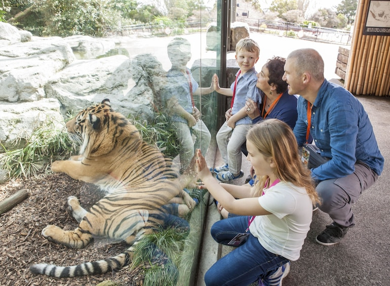 Family looking at a tiger at the Auckland Zoo