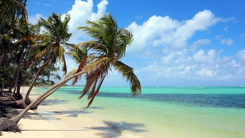 Palm trees on the beach in Bahamas