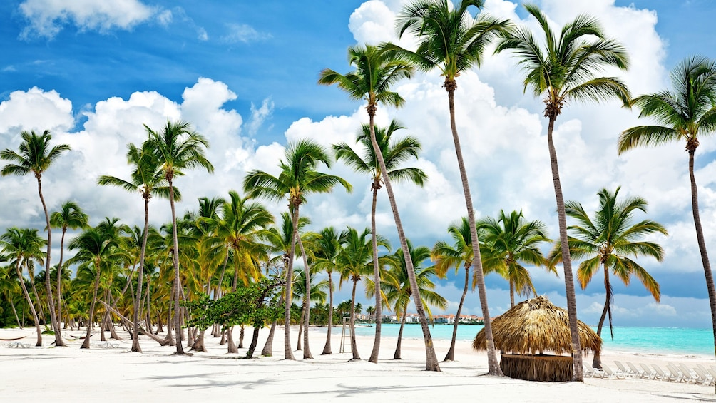 Row of palm trees and small hut on the beach in Bahamas