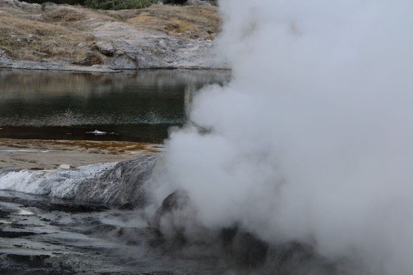 Show item 4 of 4. Steaming geyser on Rotorua tour in New Zealand