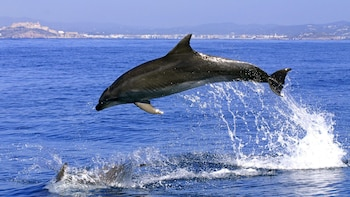 Gibraltar Dolphin-Watching Cruise - Full Day Tour