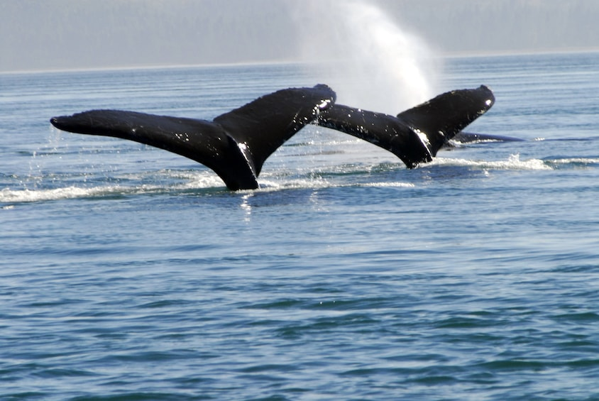 Show item 3 of 6. Exclusive Whale Watching Cruise & Tour with Glacier View
