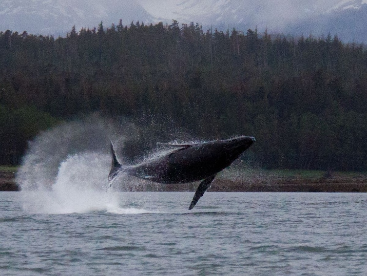 Show item 2 of 6. Exclusive Whale Watching Cruise & Tour with Glacier View