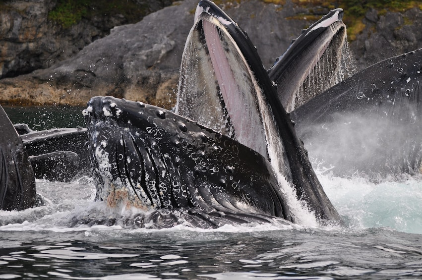 Show item 1 of 6. Exclusive Whale Watching Cruise & Tour with Glacier View