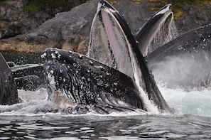 Exclusive Whale Watching Cruise & Tour with Glacier View