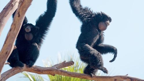 Chimpanzee at Terra Natura Benidorm