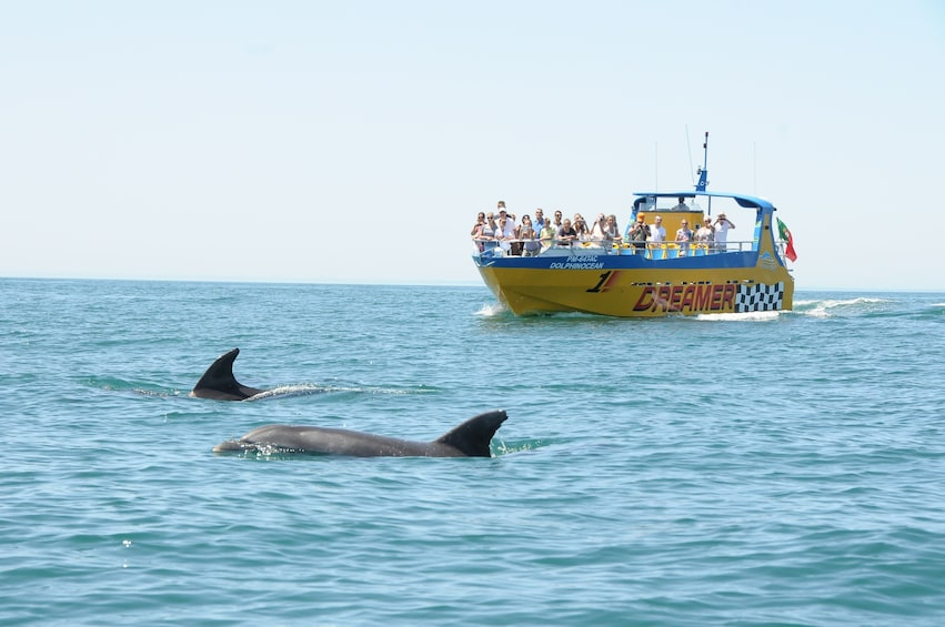 Show item 1 of 8. Dolphins near a boat off the coast of Algarve