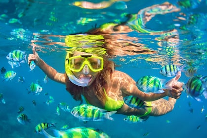 Snorkeling woman surrounded by colorful fish on Pearl Island in Bahamas
