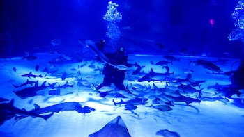 Nur Antalya Aquarium mit optionalem Transfer