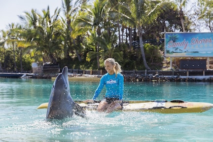 Our World of the Dolphin Presentation 300dpi.jpg