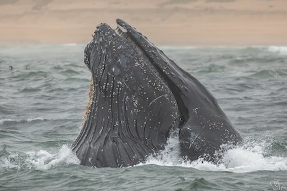 4 Hour Summer Whale Watch