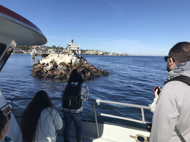 Show item 3 of 6. 4 Hour Summer Whale Watch