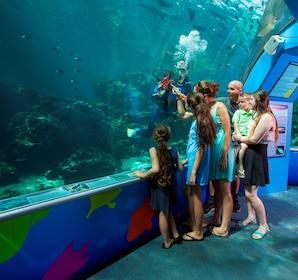 Family at an aquarium in Queensland