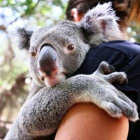 Woman snuggling a koala bear in Queensland