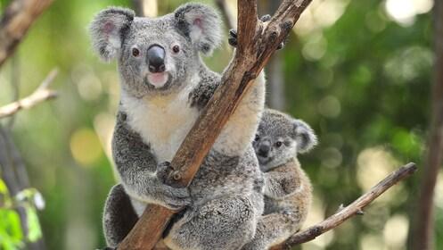 WILDLIFE Sydney Zoo_Expedia.jpg