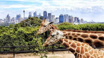 Cargar ítem 2 de 10. Go Sydney Explorer Pass: 3, 4, 5 or 7 Tours & Attractions