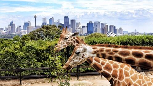 taronga zoo_expedia.jpg