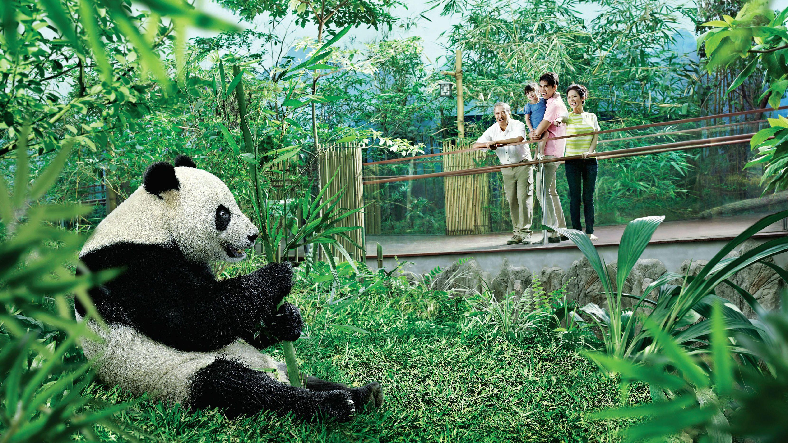 SingaporePassExpedia-07-2.jpg