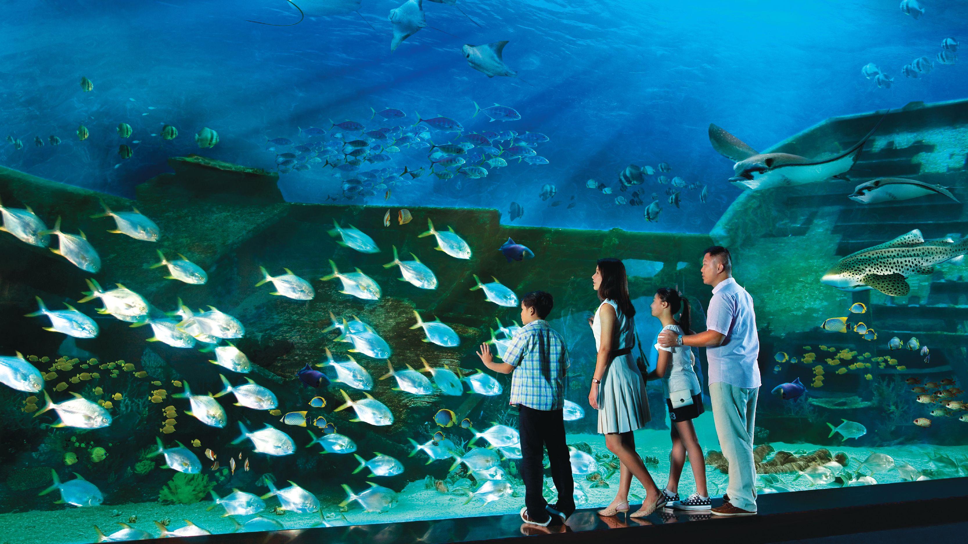 SingaporePassExpedia-08.jpg