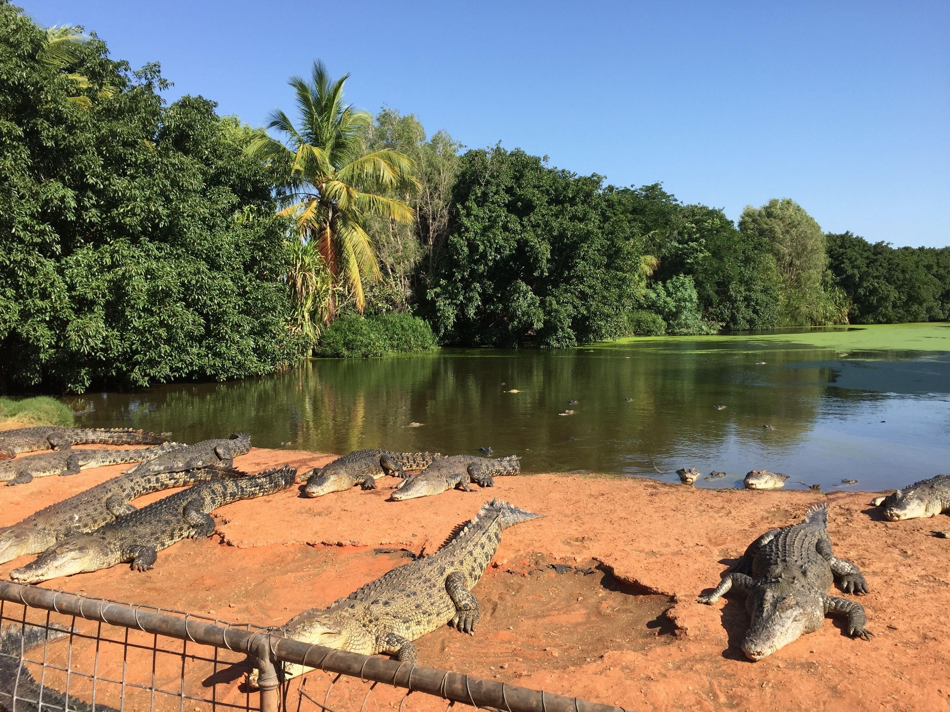 Broome 3 in 1 Tour: Croc Park, Bird Park & Mango Place