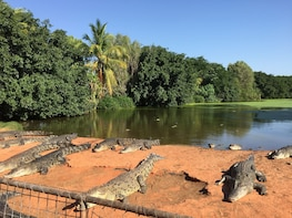 Broome 3 in 1 Tour: Croc Park, Bird Park & Mango Place