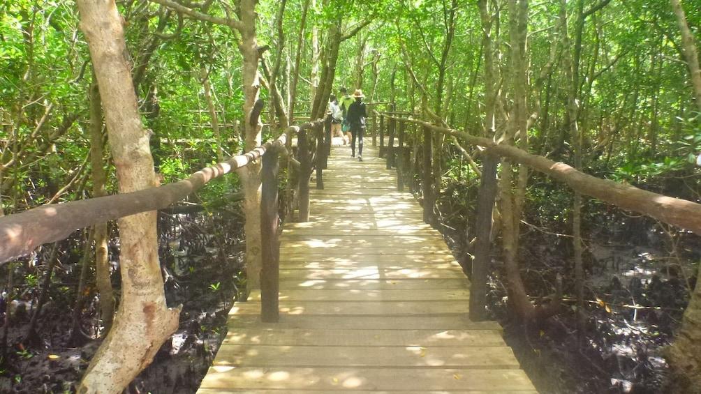 Show item 1 of 2. Boardwalk path through the jungle in Zanzibar