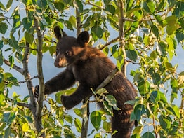 Jasper National Park Morning Wildlife Search Tour
