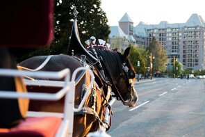 Private DELUXE Horse-Drawn Carriage Tour of Victoria