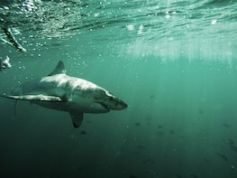 Great Whites & Great Wines: Shark Cage Diving & Wine Tasting
