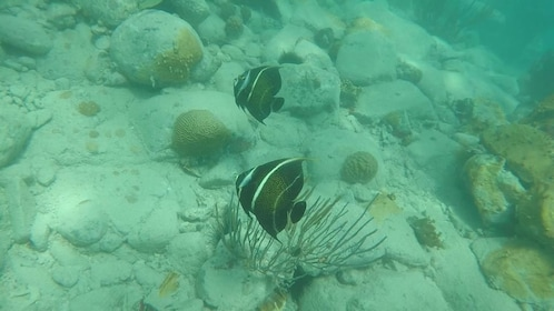 SXM Snorkeling & Discovery Tour (Full Day)