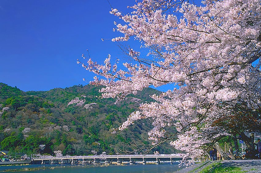 Show item 5 of 10. Sagano Romantic Train and Kyoto One Day Bus Tour from Osaka