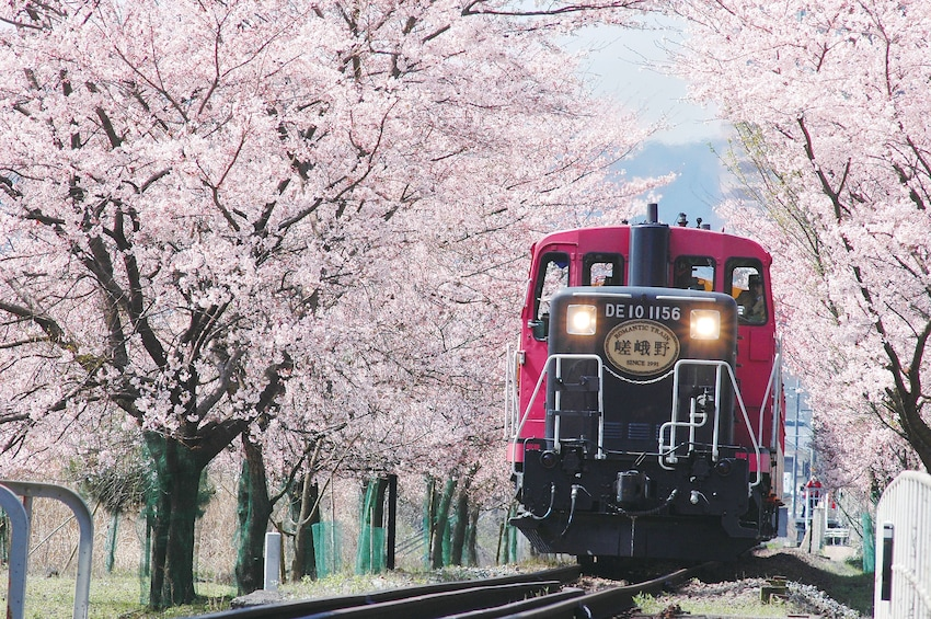 Show item 1 of 10. Train passing cherry blossoms