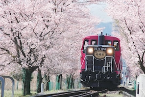 Sagano Romantic Train and Kyoto One Day Bus Tour from Osaka