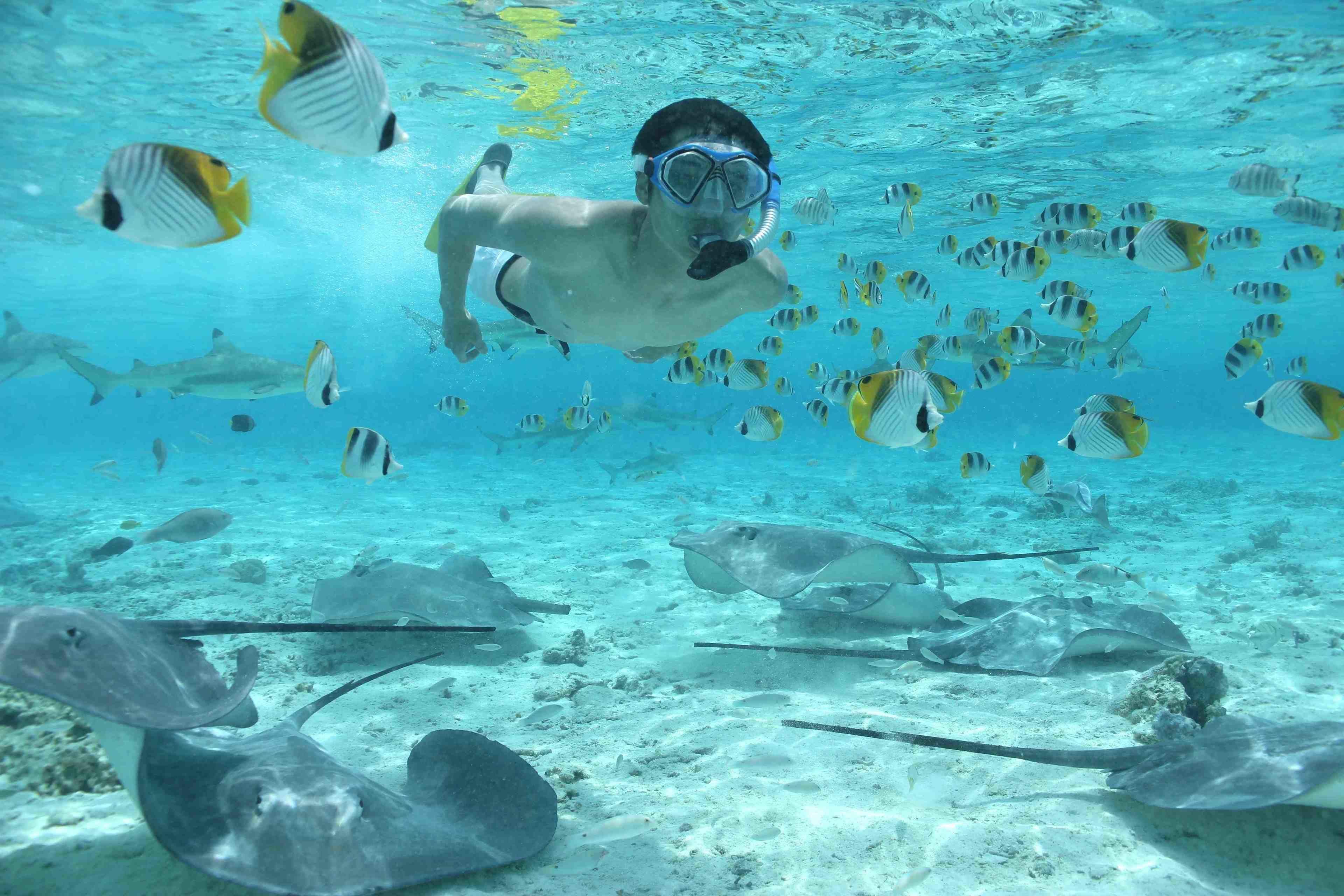 Private Bora Bora Lagoon Snorkel Cruise with BBQ Picnic