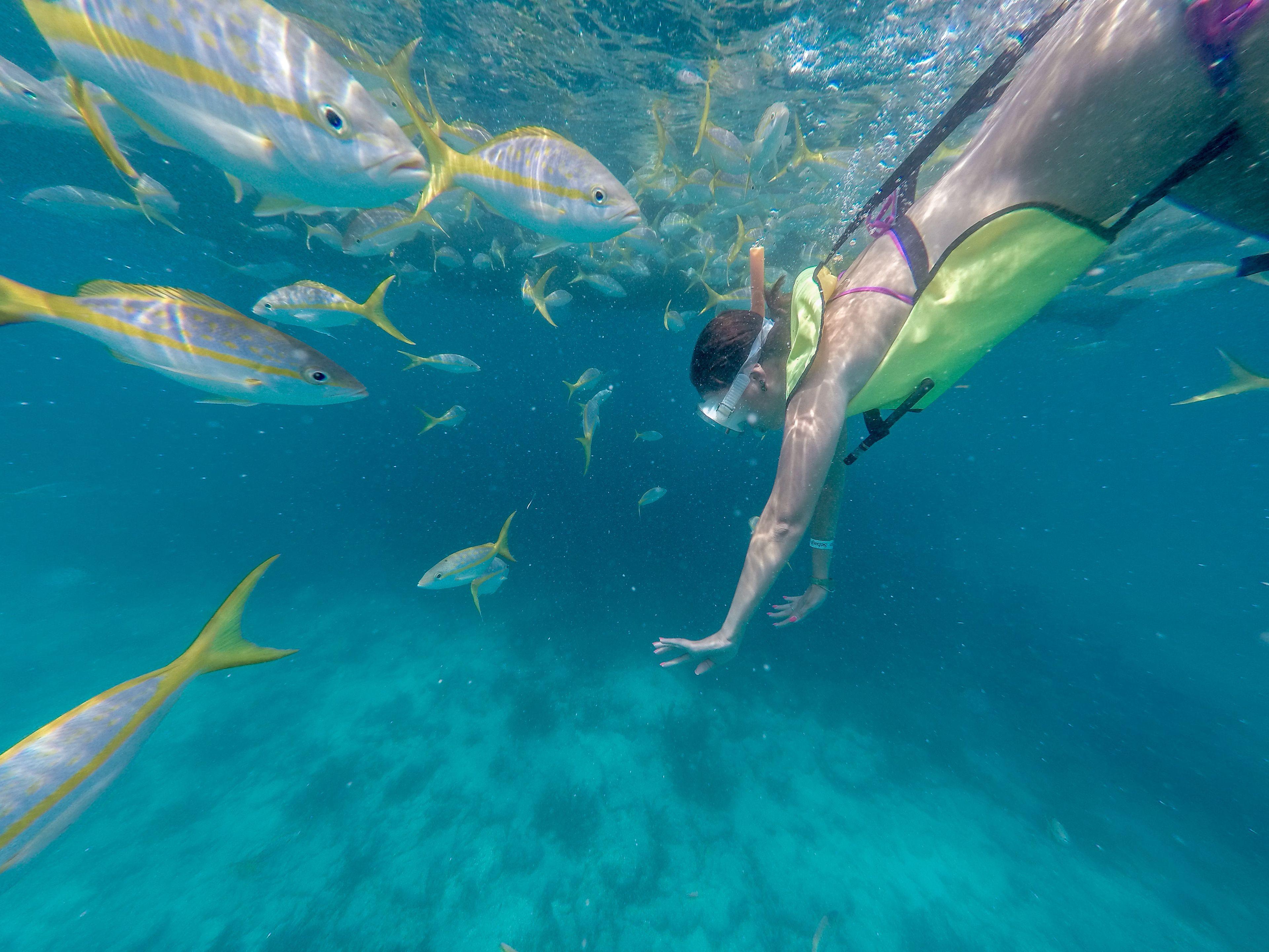 Afternoon Key West Reef Snorkel & Catamaran Sail