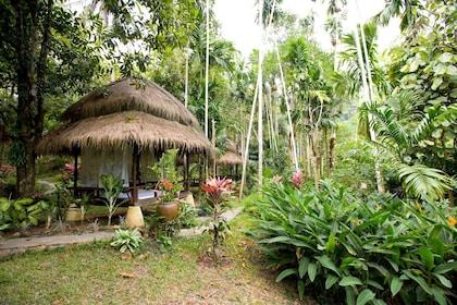 Botanical garden at the Waree Raksa Hot Spring Spa in Krabi Rainforest